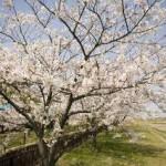 陽春の候 とは?時期や季語の使い方!