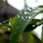 梅雨入りの平均時期。2014年梅雨入り予想は??