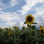 2014年は冷夏?それとも猛暑?空梅雨や気温の影響は??