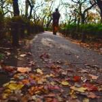 秋の七草の簡単な覚え方!種類と花言葉の意味は??