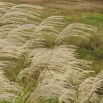 季語にも使われる野分とは?意味や由来、どんな季節なの?