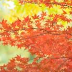 初秋の候の意味は?時期はいつからいつまで??