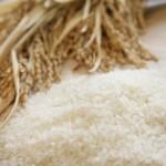 新米の時期はいつからいつまで?米の収穫時期や季節はいつ?