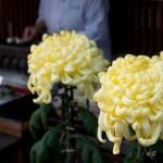 菊の花言葉は色で変わる!?季節や葬式に使われる訳は?