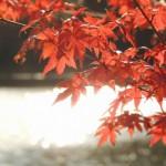 晩秋の候の意味!時期はいつ?季節の挨拶を活用しよう!!