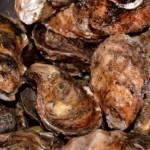 牡蠣の効能や成分!殻にも効果がありサプリや漢方にも!?