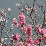 立春の候の意味!季語など挨拶として使う時期はいつからいつまで?