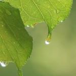 菜種梅雨とはどんな意味?由来や季語としての使い方は?
