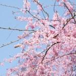 春暖の候の意味!時期はいつ?時候の挨拶や季語の使い方は?