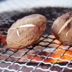 しいたけの種類と栄養!効能やカロリーは乾燥や加熱で変わるの?