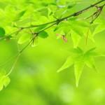 新緑の候の意味!正しい時期はいつからいつまで?同義語は??