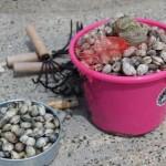 潮干狩りでとれる貝の種類の名前や見分け方!食べられない貝や貝毒は?