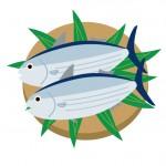 初鰹の旬な時期はいつ?戻り鰹との違いや食べ方・保存方法は?