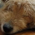 犬や猫の脱水症状の原因と対処法!応急処置には水よりポカリ!?