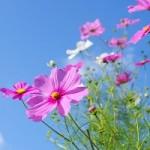 秋晴れとはどんな意味?時期はいつ?小春日和や五月晴れとの違いは?