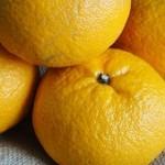 はっさくの栄養成分と効能!栄養価やカロリーをみかんと比較すると?
