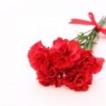 母の日に贈る花などの金額相場!義母や彼氏のお母さんには?