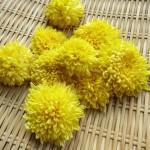 食用菊の栄養や効能!食べ方や保存方法のポイント