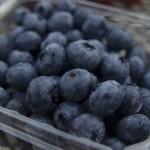 ブルーベリーの種類と特徴!その見分け方と人気の品種は?