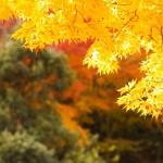 暮秋の候の意味や使う時期!時候の挨拶としての使い方は?