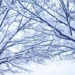 季冬の候の意味や使う時期はいつ?他の時候の挨拶との使い分け方