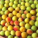 梅の驚きの効果!梅干しや梅しば、梅酢でも効果が違う!?