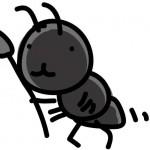 蟻に刺された時の症状と対処法!痛みや痒みなど症状別に使う薬の選び方