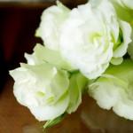 トルコキキョウの花言葉と由来!ピンクや白、紫など色別でも意味が違う?