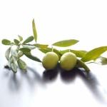 オリーブの実の栄養や効能!漬けは太る?カロリーは?