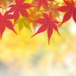 秋冷の候の意味や使う時期はいつから?結びの例文は??