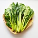 小松菜の栄養と保存方法!保存期間を長持ちさせるには?