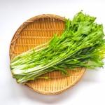 水菜の育て方のコツは温度?ペットボトルを使った栽培方法