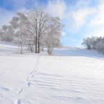厳寒の候の意味や使う時期はいつまで?時候の挨拶の使い方は?
