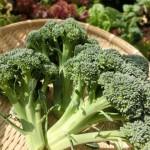 ブロッコリーの育て方!プランターで育てる場合や追肥、収穫後の注意点
