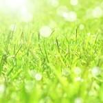 惜春の候の意味と使う時期はいつ?ビジネス文書で使うときのポイントは?